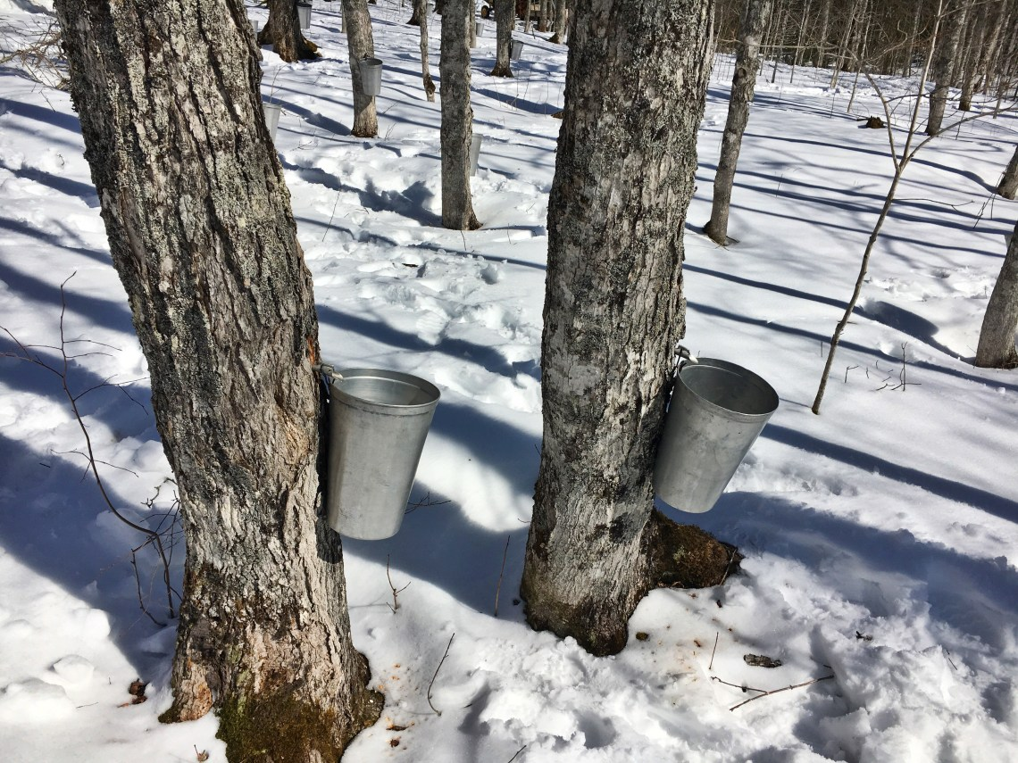 Maple Sugar Camp Moncton New Brunswick