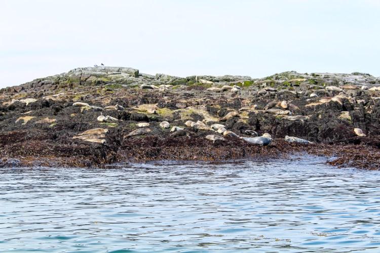 Machias Island 22