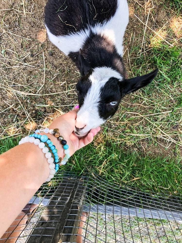 Kingsbrae Gardens - Goats - St. Andrews