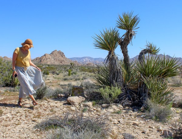 Day Trip to Joshua Tree From Palm Springs