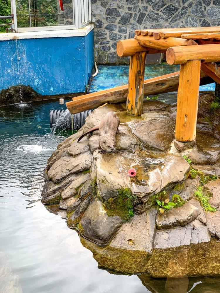 Magnetic Hill Zoo - Otter - East Coast Mermaid