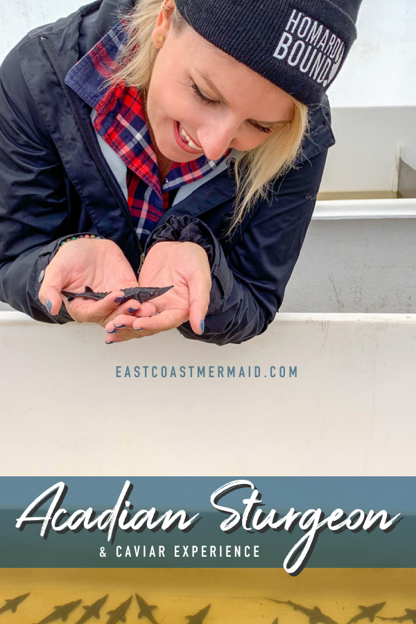 When the Eating Heritage organizers proposed a field trip to spend a day with Cornel and Dorina Ceapa, the owners of Acadian Sturgeon and Caviar at their beautiful location in Carters Point, New Brunswick—I cleared my schedule and had this experience.