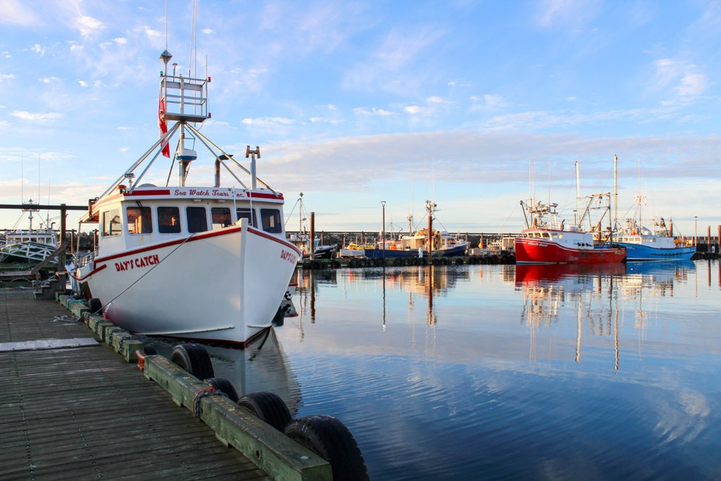 Whale Watching New Brunswick Guide - East Coast Mermaid