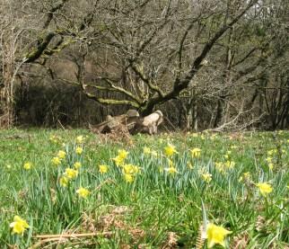 Rudge Meadow