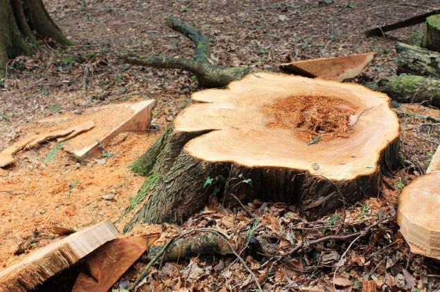 rot in stump