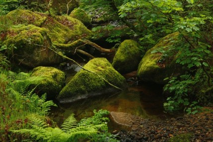The magical Becka Brook, mossy boulders, waterfalls and pools