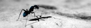 Blue ant standing against black and white background