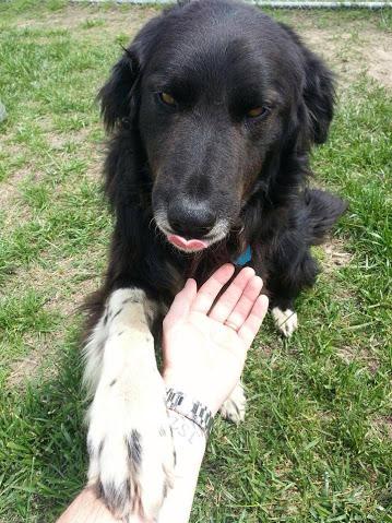 Buddy - Adopted 2014!