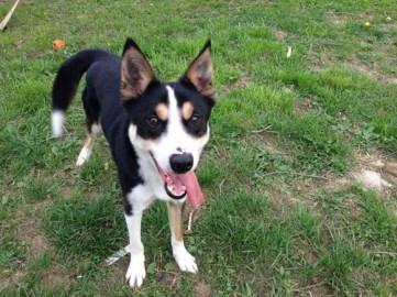 Rupert - Adopted 2014!