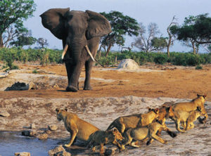 2-days-tsavo-east-elephant
