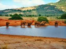 4 days Tsavo east-west-amboseli safari to a nature and wildlife parks