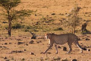 3 days masai mara kenya safari by road from nairobi to the home of the big five