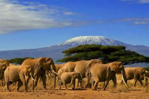 4 days Tsavo east-west-amboseli safari tours