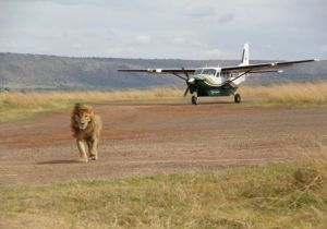 Mombasa amboseli air Safari - 2 Days of unlimited wildlife viewing