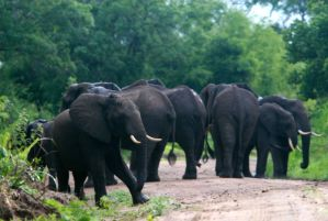 Tsavo East Salt lick Safari -2 days