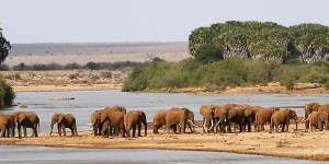 Tsavo West National Park - Seleted safaris by Eastern Vacations to Tsavo west