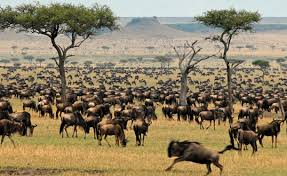 Masai mara air safari packages by eastern vacations on offer