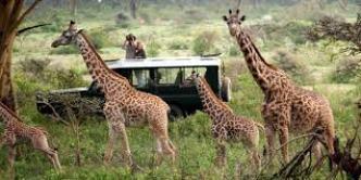 Kenya Safari holidays from mombasa