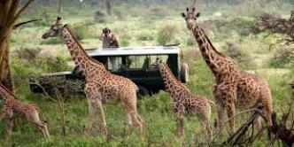 Best Kenya family Safaris & holiday tours from mombasa