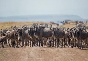 Kenya Safari Delights