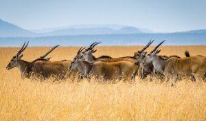 7 Days Wildlife Safari Kenya Vacation tour ending at the Kenya coast beach resorts