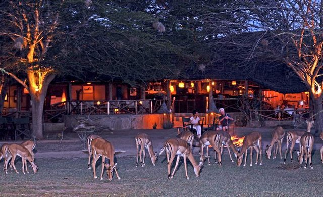Satao Camp Tsavo East