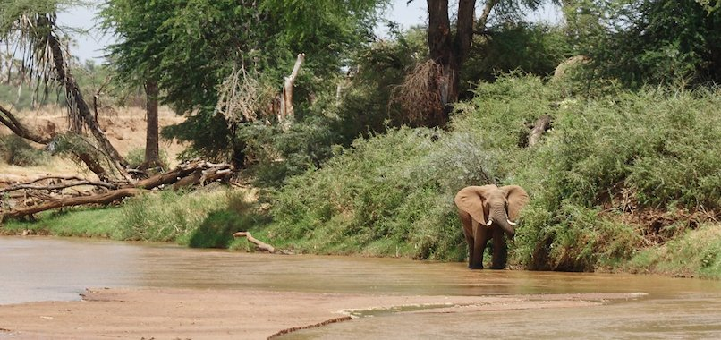 samburu-game-lodge5