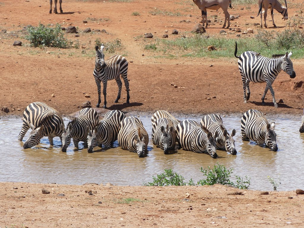 kilaguni-serena-safari-lodge-waterhole-zebra