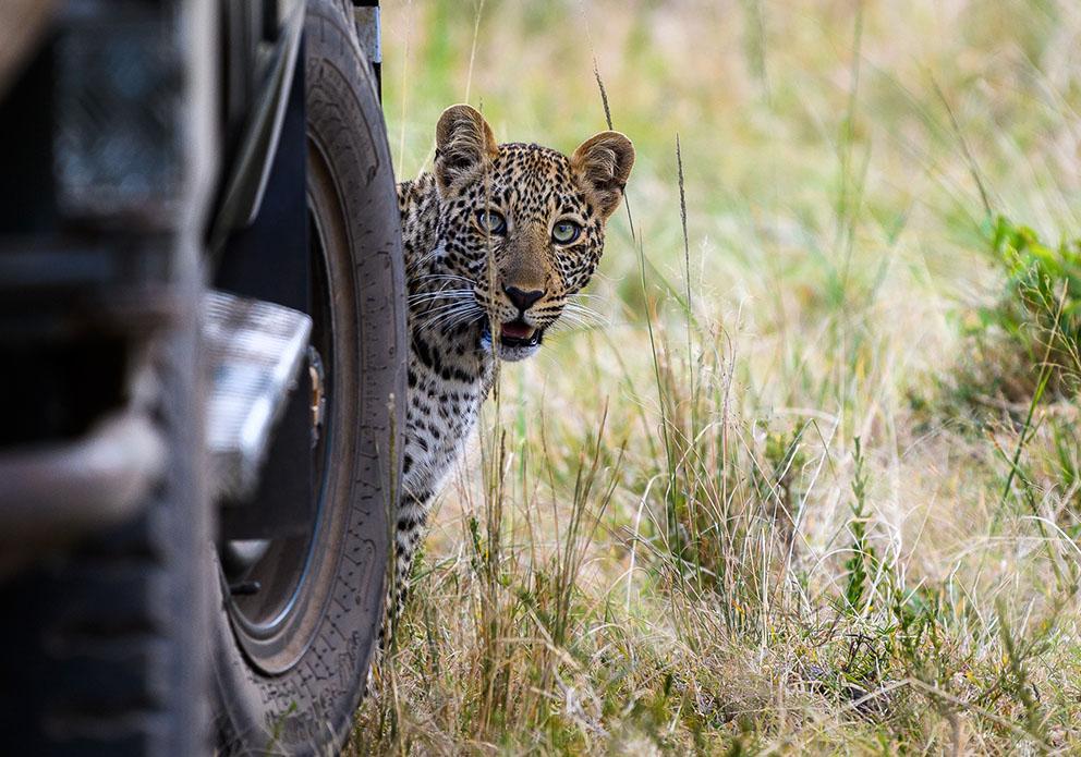 Classic Kenya Safari Tour