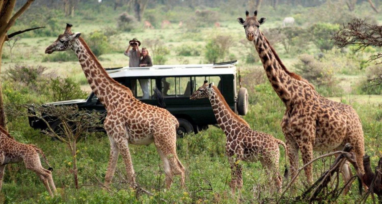 Kenya Wildlife Safari Holiday