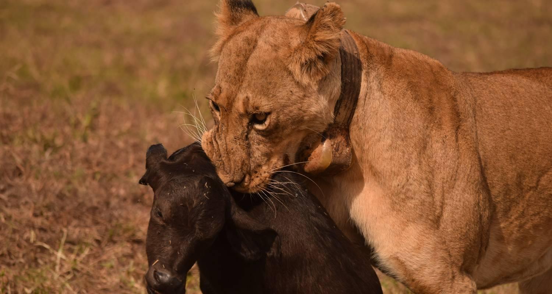 1 Day Tsavo East Safari