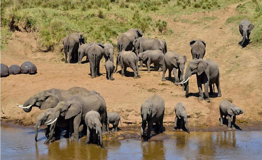 Tsavo West Amboseli National Park safari