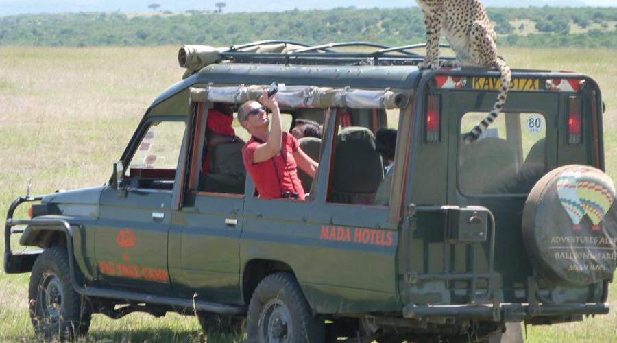 Fig tree camp -Masai Mara