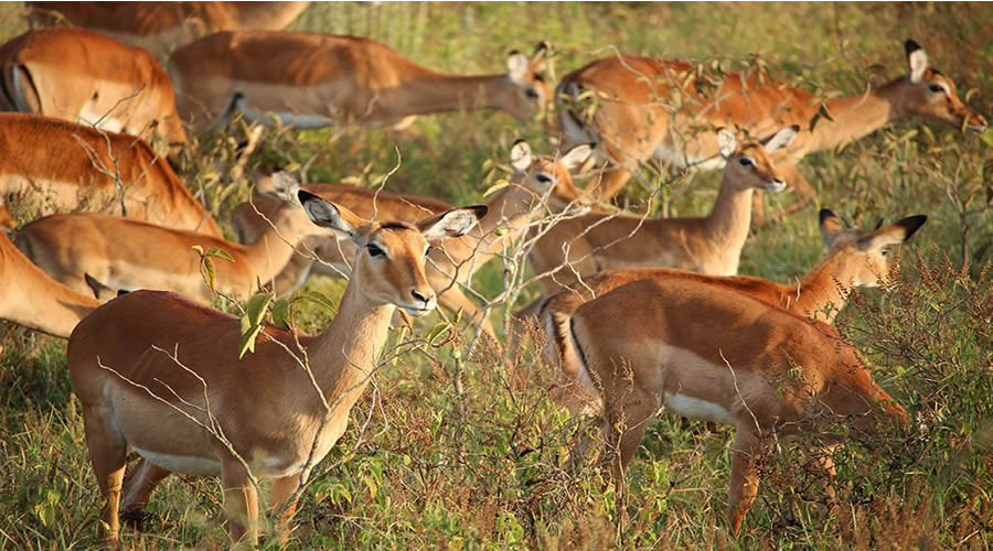 2 days Tsavo East Salt Lick Safari