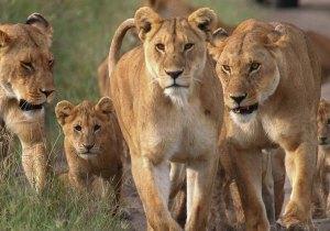 Nakuru Mara Naivasha safari