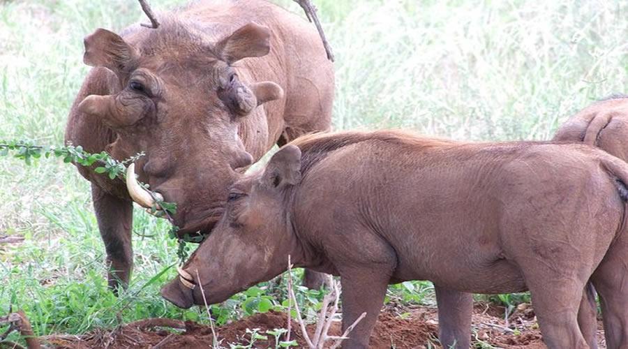 kenya day trip Safaris