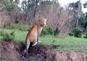 Samburu 3-day Road Safari