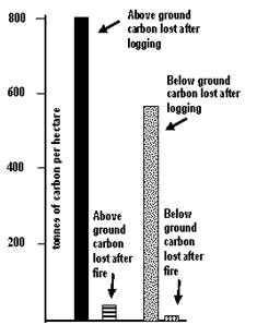 Carbon lost in logging and fire graph