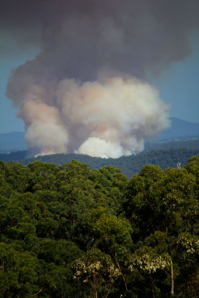 One single logged area of forest (30-40ha) generates a massive amount of C02 pollution and releases hundreds of years of stored carbon into the atmosphere.