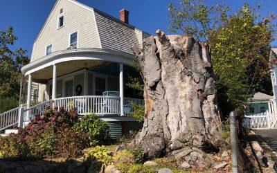 A Tree Dies on Spring Street