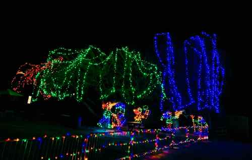 zoo holiday lights 5