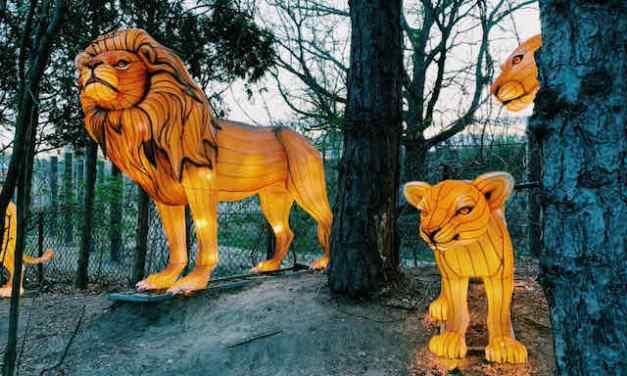Animal-Shaped Lanterns Light Up Zoo