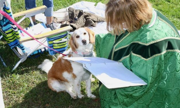 Blessing of Animals Sunday (10/3) at Academy Field