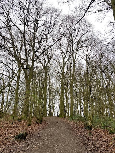 birchanger woods