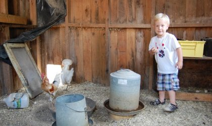 Resources for Raising Chickens
