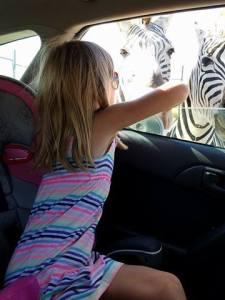 safarizebra