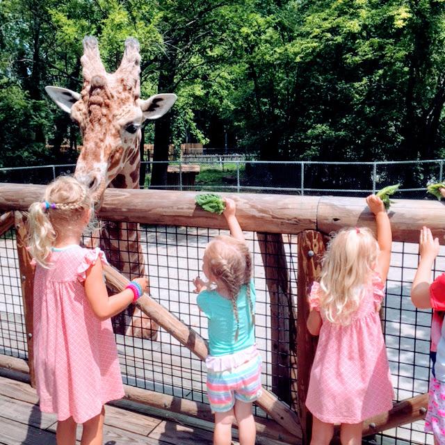 Memphis Zoo Giraffes