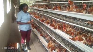 Photo of How 30 Year Old University Graduate Is Minting Millions From Poultry