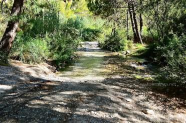 Stream on the road to El Acebuchal