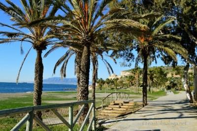 Tree-lined walkway, La Arana